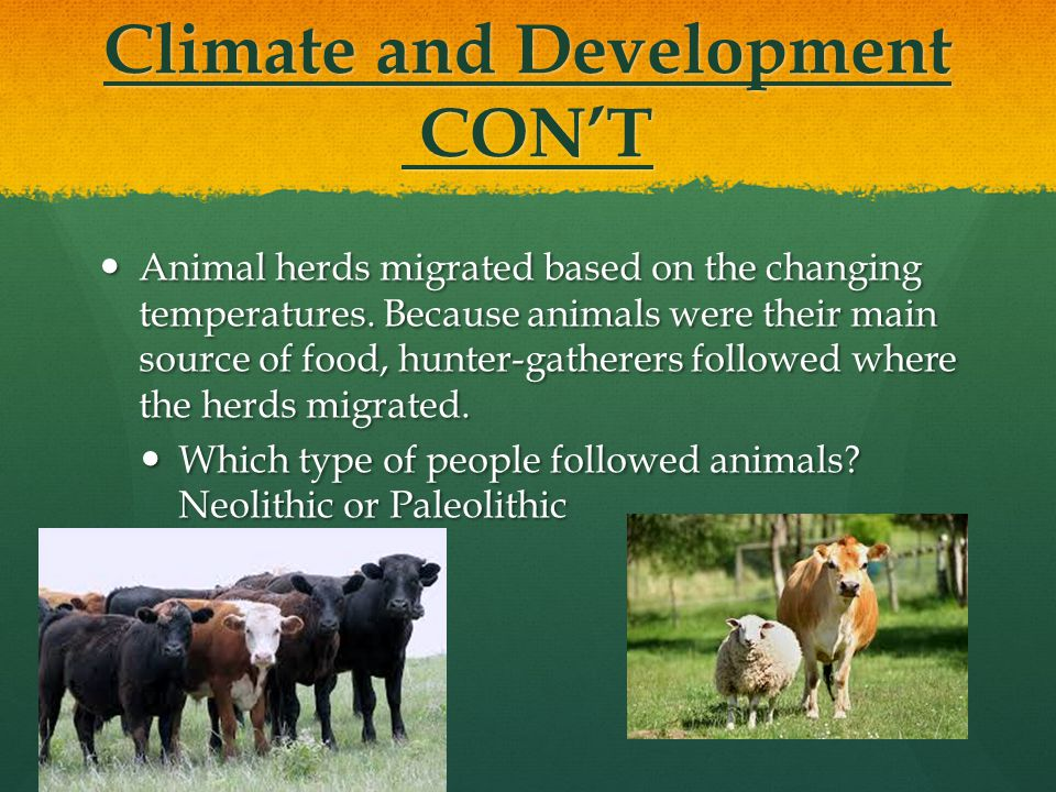 Climate and Development CON'T Animal herds migrated based on the changing temperatures. Because animals were their main source of food, hunter-gathere