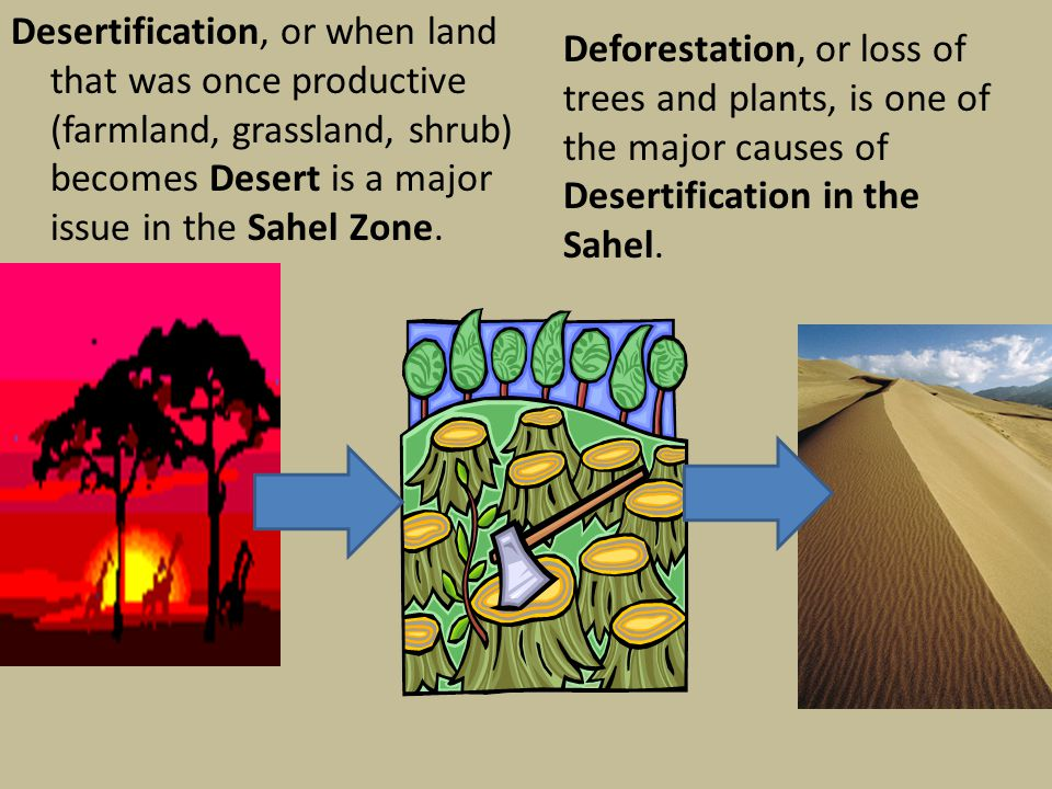Desertification, or when land that was once productive (farmland, grassland, shrub) becomes Desert is a major issue in the Sahel Zone. Deforestation,