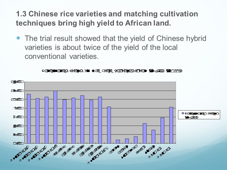 1.3 Chinese rice varieties and matching cultivation techniques bring high yield to African land.
