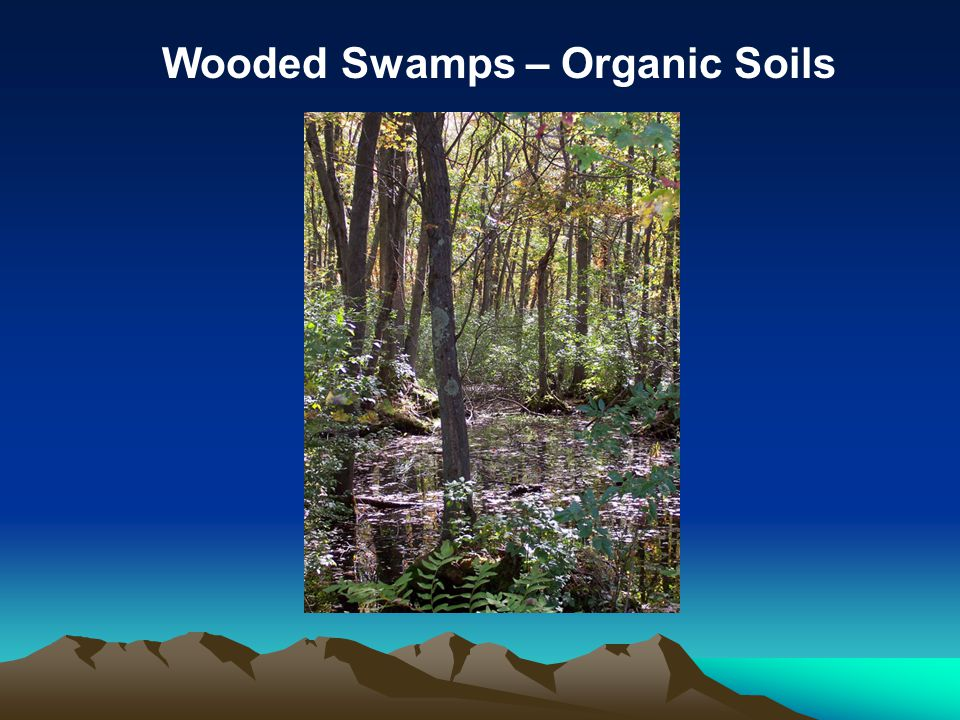 Wooded Swamps – Organic Soils