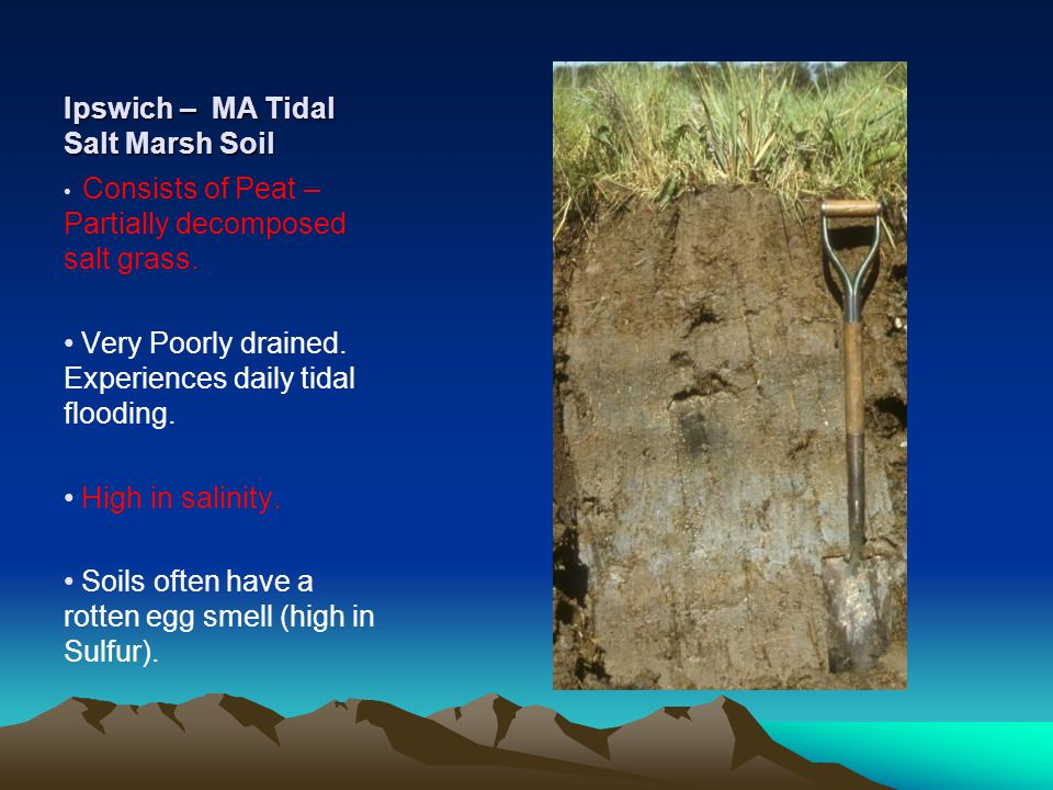 Ipswich – MA Tidal Salt Marsh Soil Consists of Peat – Partially decomposed salt grass.