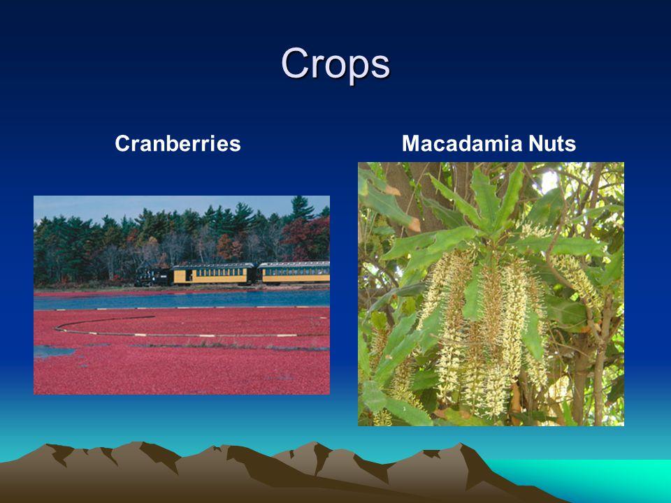 Crops CranberriesMacadamia Nuts