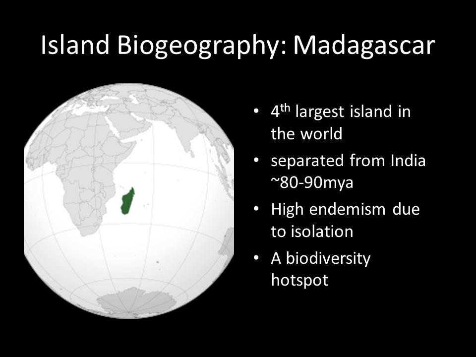 Island Biogeography: Madagascar 4 th largest island in the world separated from India ~80-90mya High endemism due to isolation A biodiversity hotspot