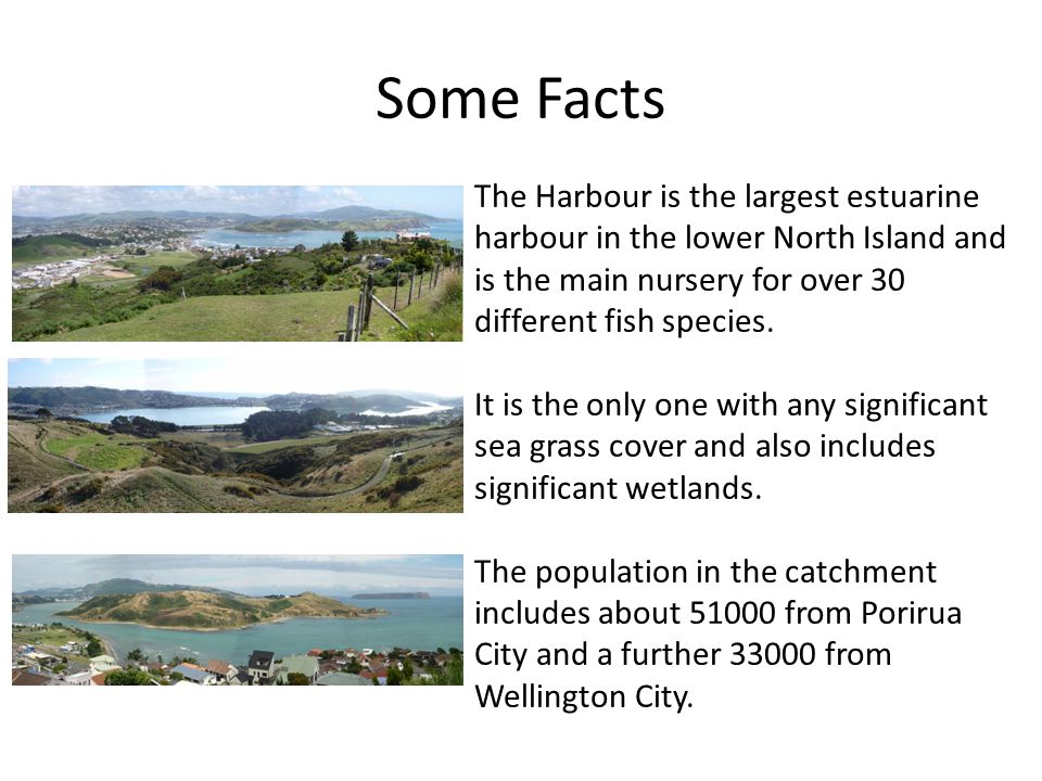 Some Facts The Harbour is the largest estuarine harbour in the lower North Island and is the main nursery for over 30 different fish species.
