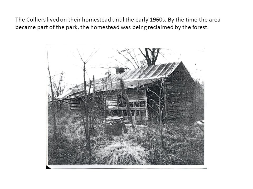 The Colliers lived on their homestead until the early 1960s.