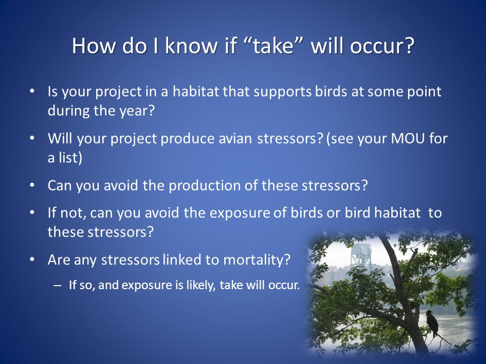 "How do I know if ""take"" will occur? Is your project in a habitat that supports birds at some point during the year? Will your project produce avian st"