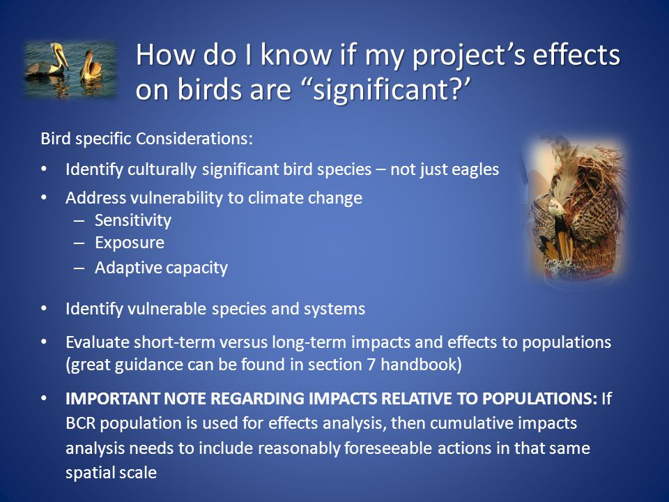 Bird specific Considerations: Identify culturally significant bird species – not just eagles Address vulnerability to climate change – Sensitivity – Exposure – Adaptive capacity Identify vulnerable species and systems Evaluate short-term versus long-term impacts and effects to populations (great guidance can be found in section 7 handbook) IMPORTANT NOTE REGARDING IMPACTS RELATIVE TO POPULATIONS: If BCR population is used for effects analysis, then cumulative impacts analysis needs to include reasonably foreseeable actions in that same spatial scale How do I know if my project's effects on birds are significant?'