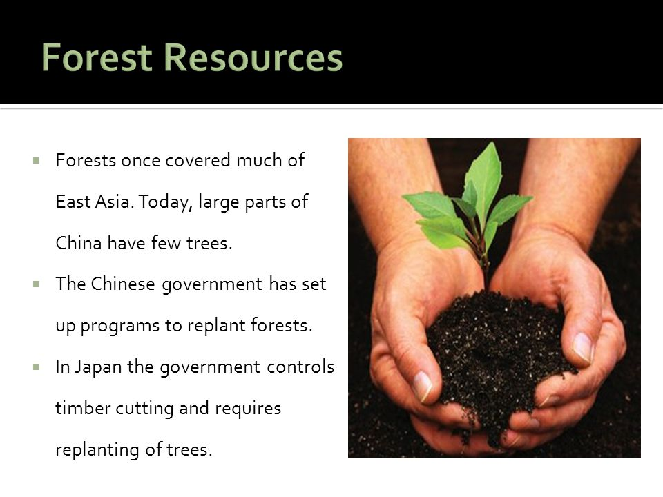  Forests once covered much of East Asia. Today, large parts of China have few trees.  The Chinese government has set up programs to replant forests.