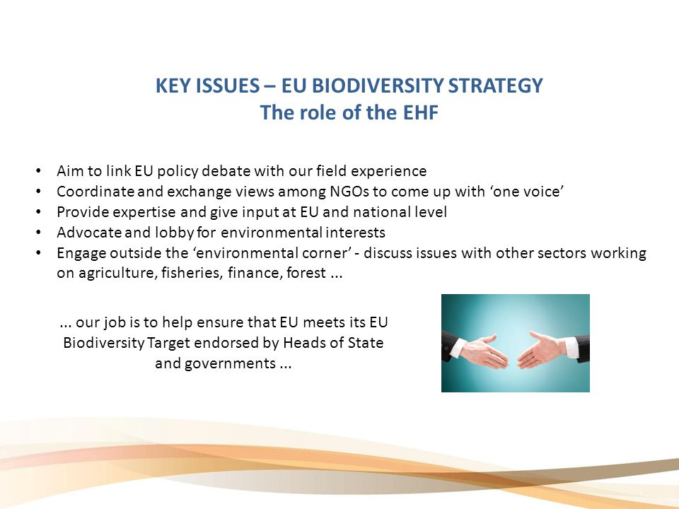 KEY ISSUES – EU BIODIVERSITY STRATEGY The role of the EHF Aim to link EU policy debate with our field experience Coordinate and exchange views among NGOs to come up with 'one voice' Provide expertise and give input at EU and national level Advocate and lobby for environmental interests Engage outside the 'environmental corner' - discuss issues with other sectors working on agriculture, fisheries, finance, forest......