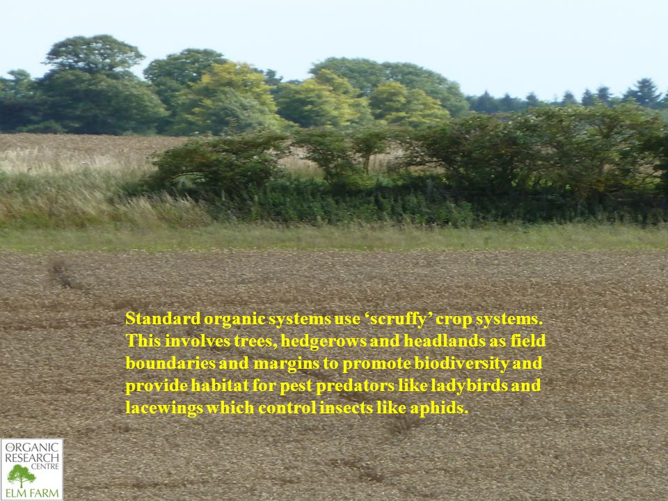 Standard organic systems use 'scruffy' crop systems.