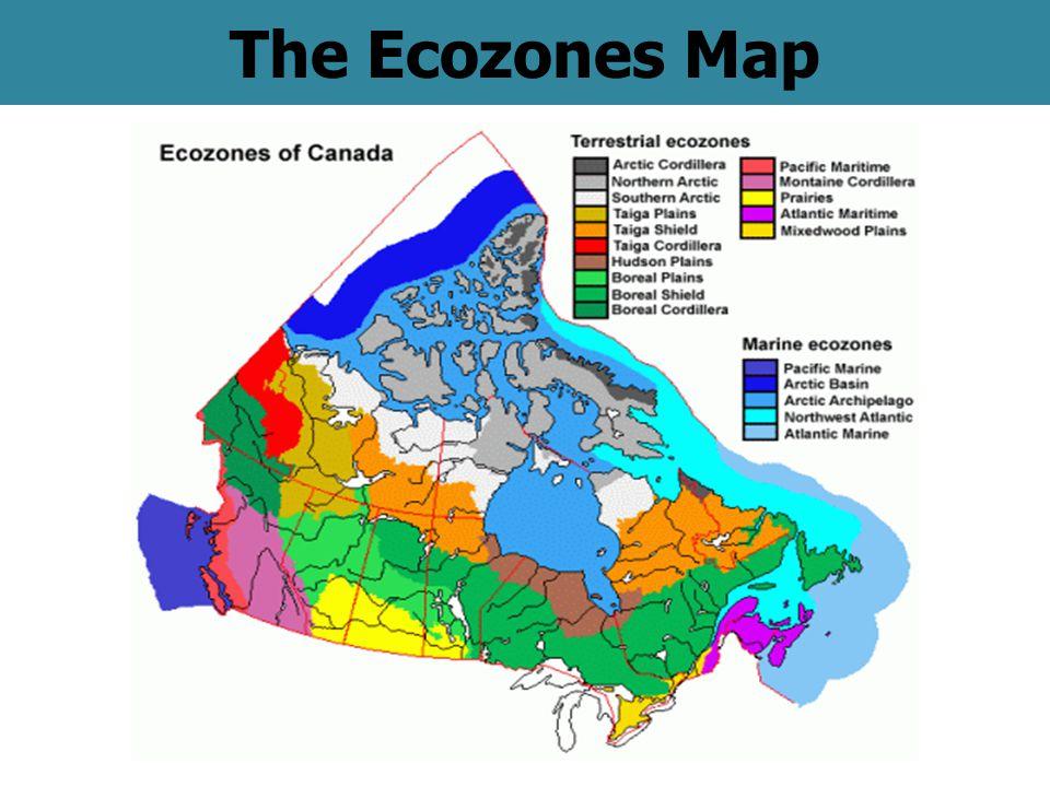 The Ecozones Map