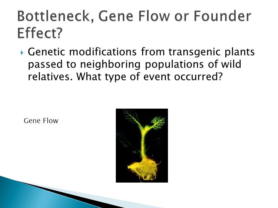  Genetic modifications from transgenic plants passed to neighboring populations of wild relatives. What type of event occurred? Gene Flow