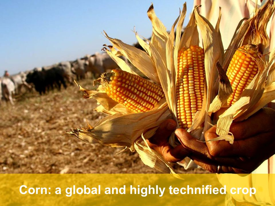 5 The big picture Yields have advanced – but more is needed Corn: a global and highly technified crop