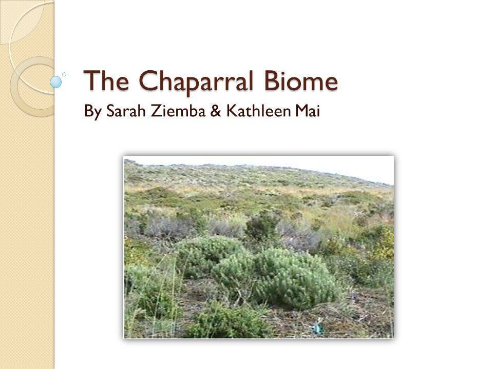 The Chaparral Biome By Sarah Ziemba & Kathleen Mai