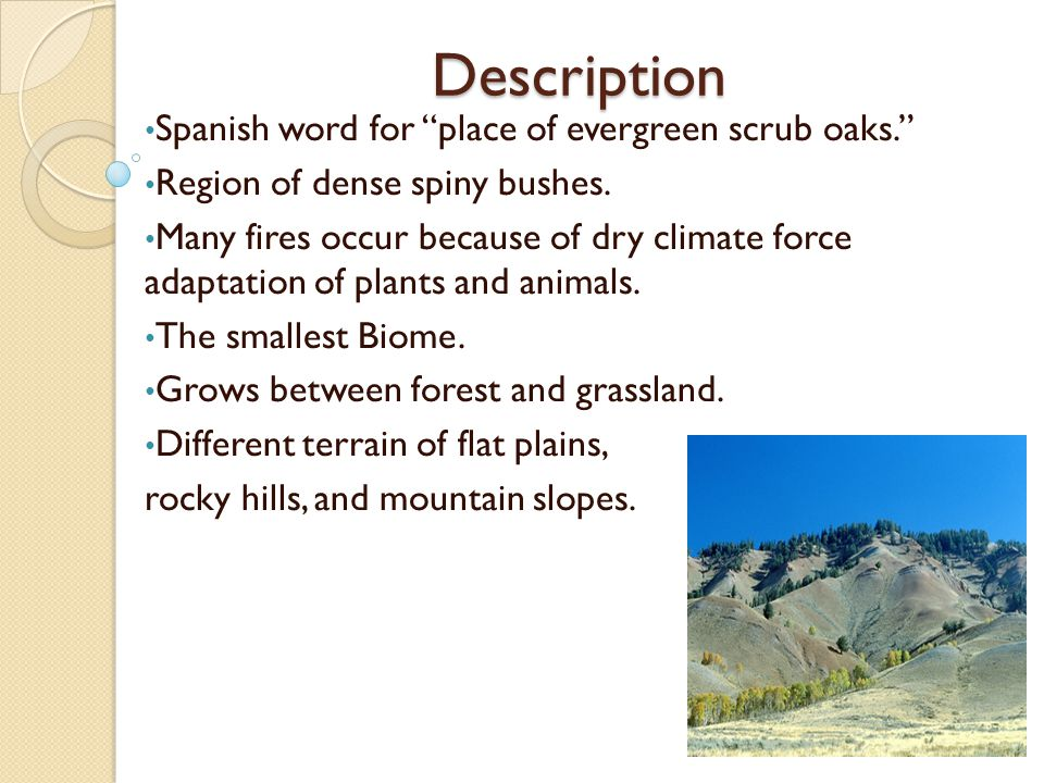 Description Spanish word for place of evergreen scrub oaks. Region of dense spiny bushes.