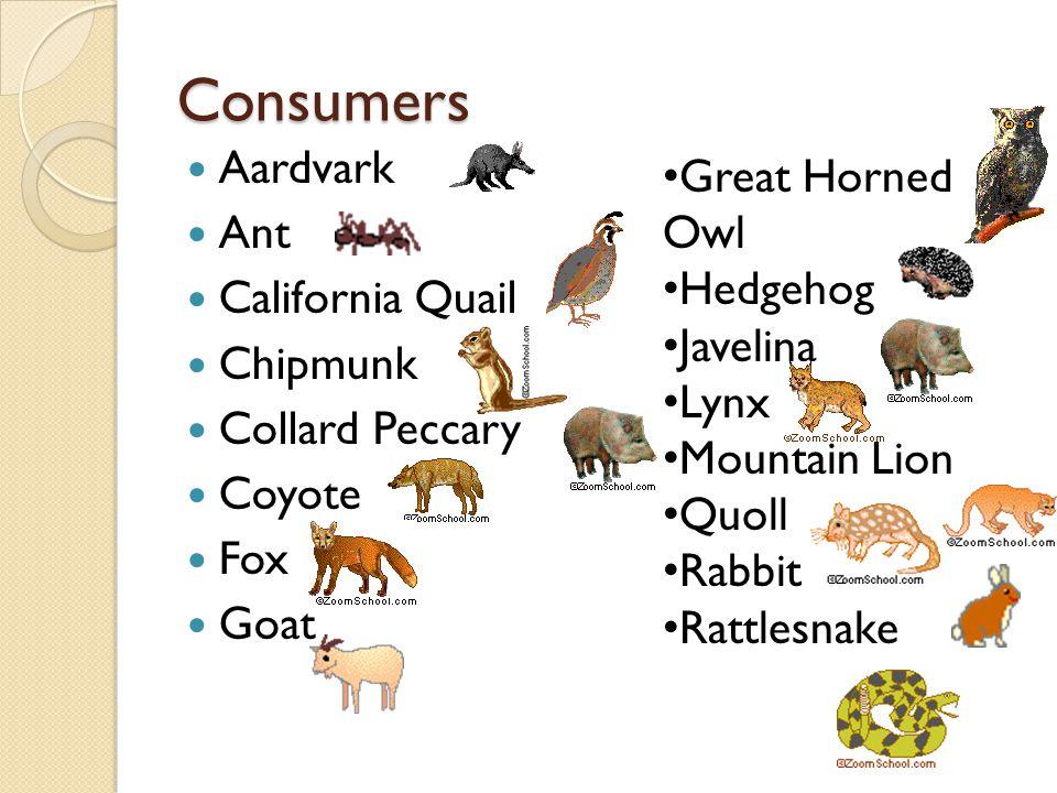 Consumers Aardvark Ant California Quail Chipmunk Collard Peccary Coyote Fox Goat Great Horned Owl Hedgehog Javelina Lynx Mountain Lion Quoll Rabbit Ra