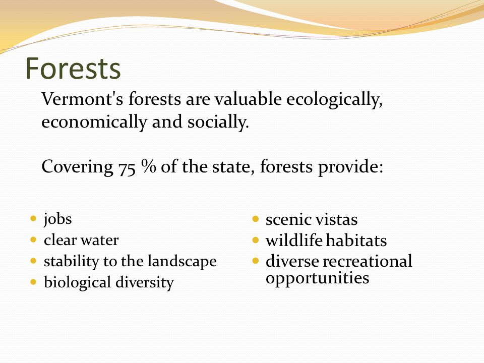Forests jobs clear water stability to the landscape biological diversity scenic vistas wildlife habitats diverse recreational opportunities Vermont s forests are valuable ecologically, economically and socially.