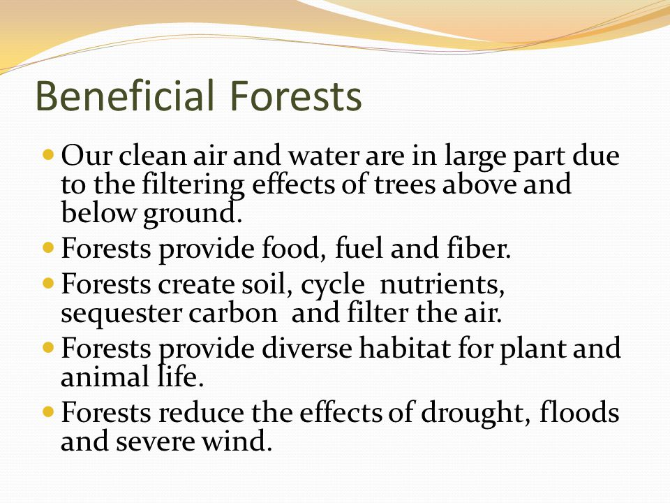 Beneficial Forests Our clean air and water are in large part due to the filtering effects of trees above and below ground.