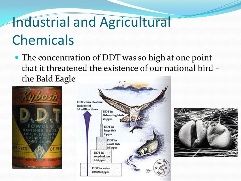 Industrial and Agricultural Chemicals The concentration of DDT was so high at one point that it threatened the existence of our national bird – the Ba