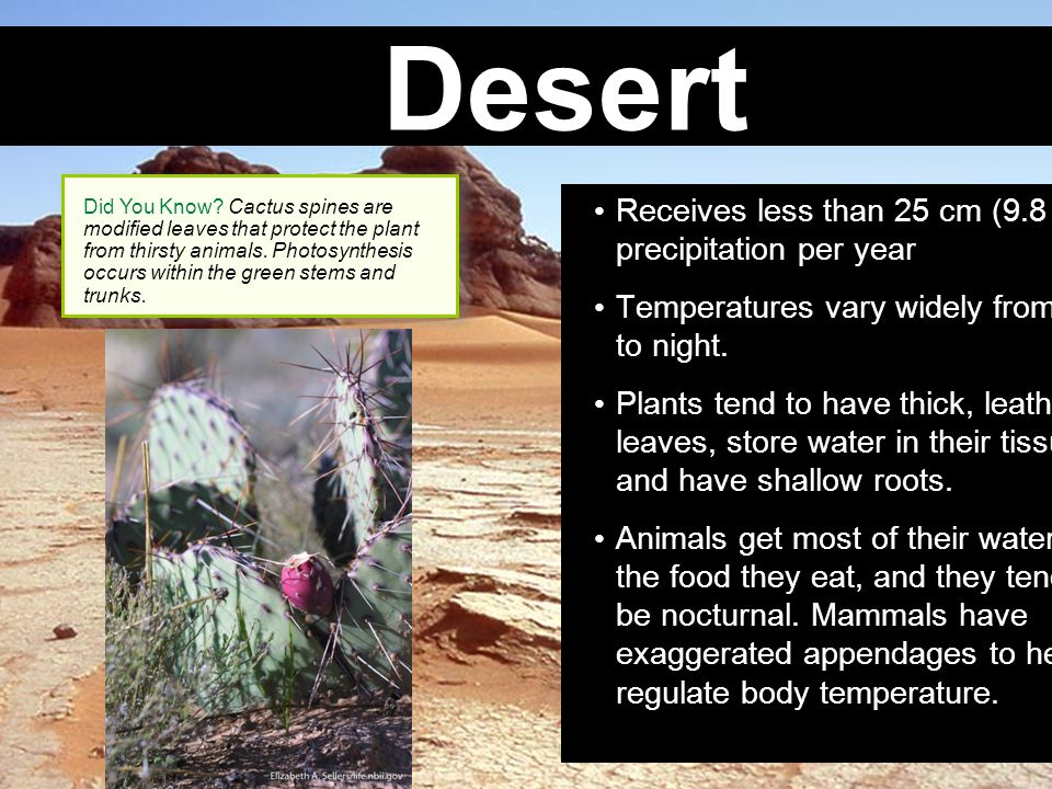 Desert Receives less than 25 cm (9.8 in.) of precipitation per year Temperatures vary widely from day to night. Plants tend to have thick, leathery le