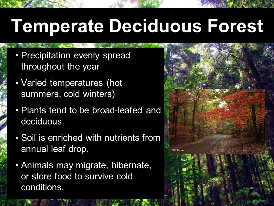 Temperate Deciduous Forest Precipitation evenly spread throughout the year Varied temperatures (hot summers, cold winters) Plants tend to be broad-lea