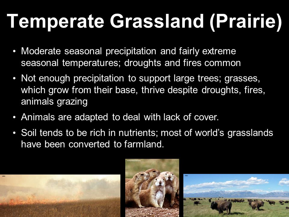 Temperate Grassland (Prairie) Moderate seasonal precipitation and fairly extreme seasonal temperatures; droughts and fires common Not enough precipita