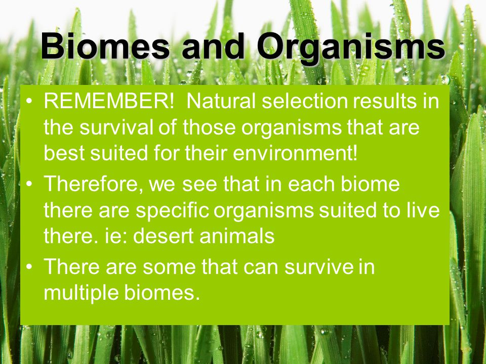 Net Primary Production Ecologists compare biomes by not only looking at climate and organisms…but also by looking at how much energy and organic matter they generate.