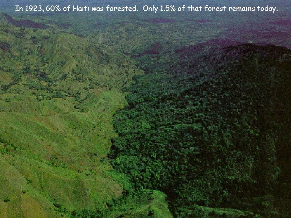 Trees protect land from the impact of tropical storms, prevent soil erosion and regulate the water cycle.