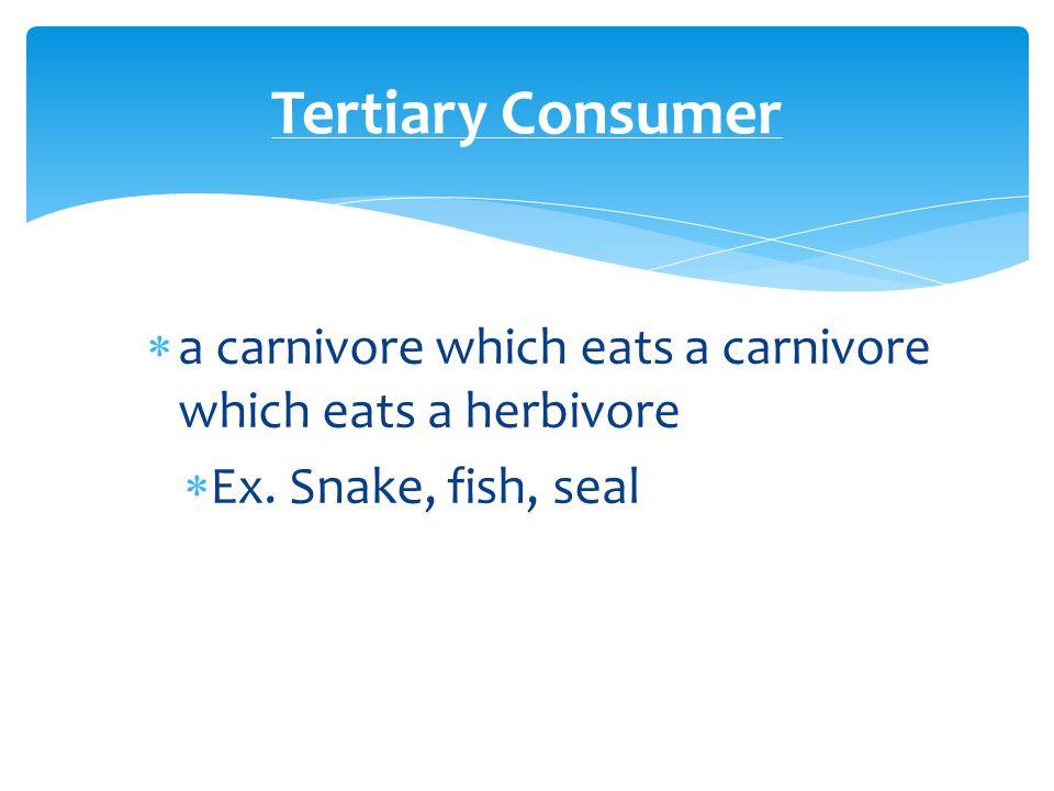  a carnivore which eats a carnivore which eats a herbivore  Ex.
