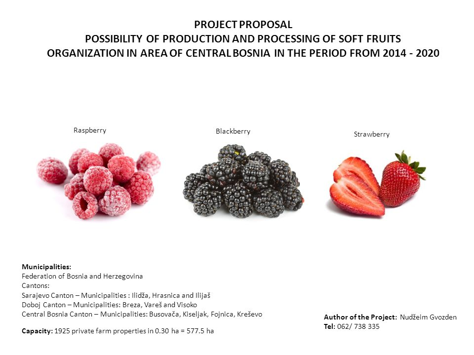 PROJECT PROPOSAL POSSIBILITY OF PRODUCTION AND PROCESSING OF SOFT FRUITS ORGANIZATION IN AREA OF CENTRAL BOSNIA IN THE PERIOD FROM 2014 - 2020 Capacity: 1925 private farm properties in 0.30 ha = 577.5 ha Municipalities: Federation of Bosnia and Herzegovina Cantons: Sarajevo Canton – Municipalities : Ilidža, Hrasnica and Ilijaš Doboj Canton – Municipalities: Breza, Vareš and Visoko Central Bosnia Canton – Municipalities: Busovača, Kiseljak, Fojnica, Kreševo Blackberry Strawberry Raspberry Author of the Project: Nudžeim Gvozden Tel: 062/ 738 335