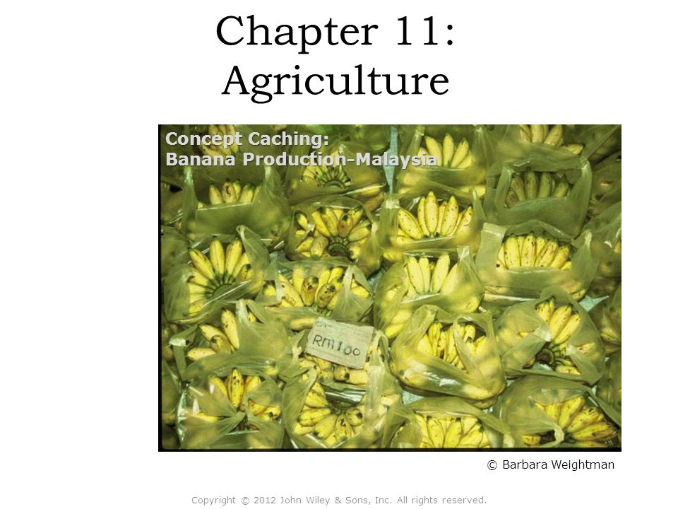 Chapter 11: Agriculture Copyright © 2012 John Wiley & Sons, Inc. All rights reserved. © Barbara Weightman Concept Caching: Banana Production-Malaysia