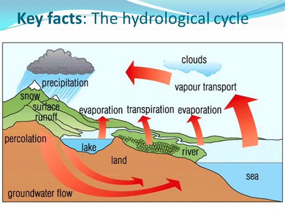 Key facts: The hydrological cycle