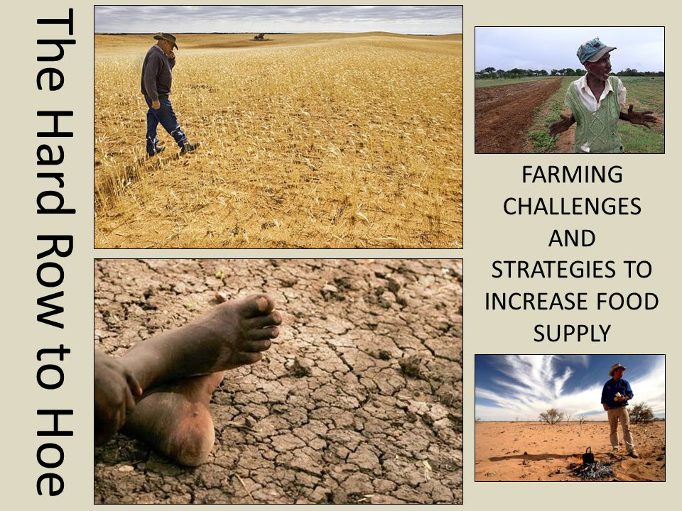 The Hard Row to Hoe FARMING CHALLENGES AND STRATEGIES TO INCREASE FOOD SUPPLY
