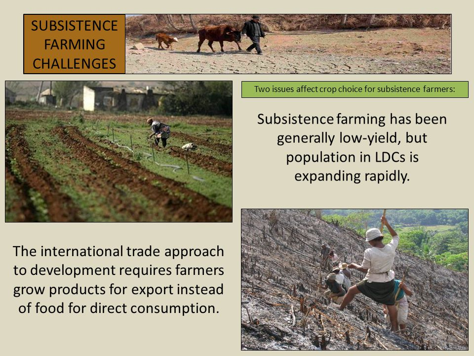 SUBSISTENCE FARMING CHALLENGES Two issues affect crop choice for subsistence farmers: Subsistence farming has been generally low-yield, but population