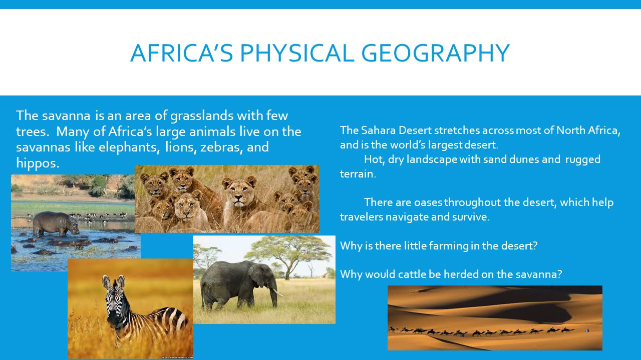 AFRICA'S PHYSICAL GEOGRAPHY The savanna is an area of grasslands with few trees. Many of Africa's large animals live on the savannas like elephants, l