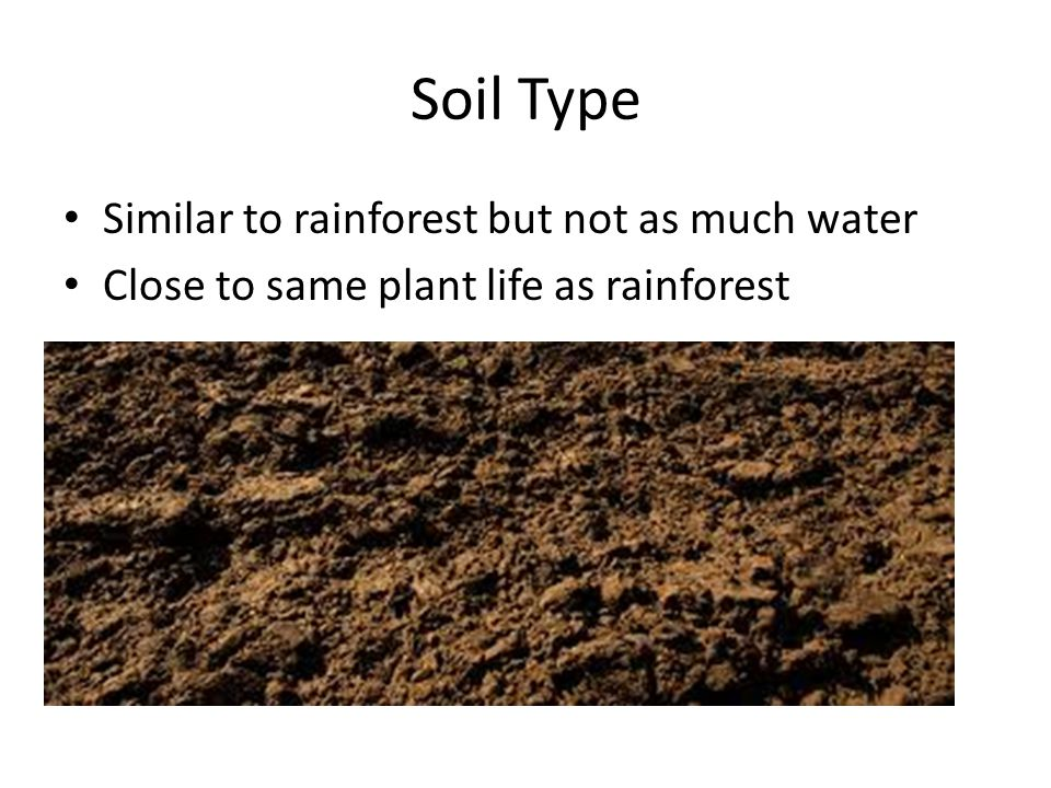 Soil Type Similar to rainforest but not as much water Close to same plant life as rainforest