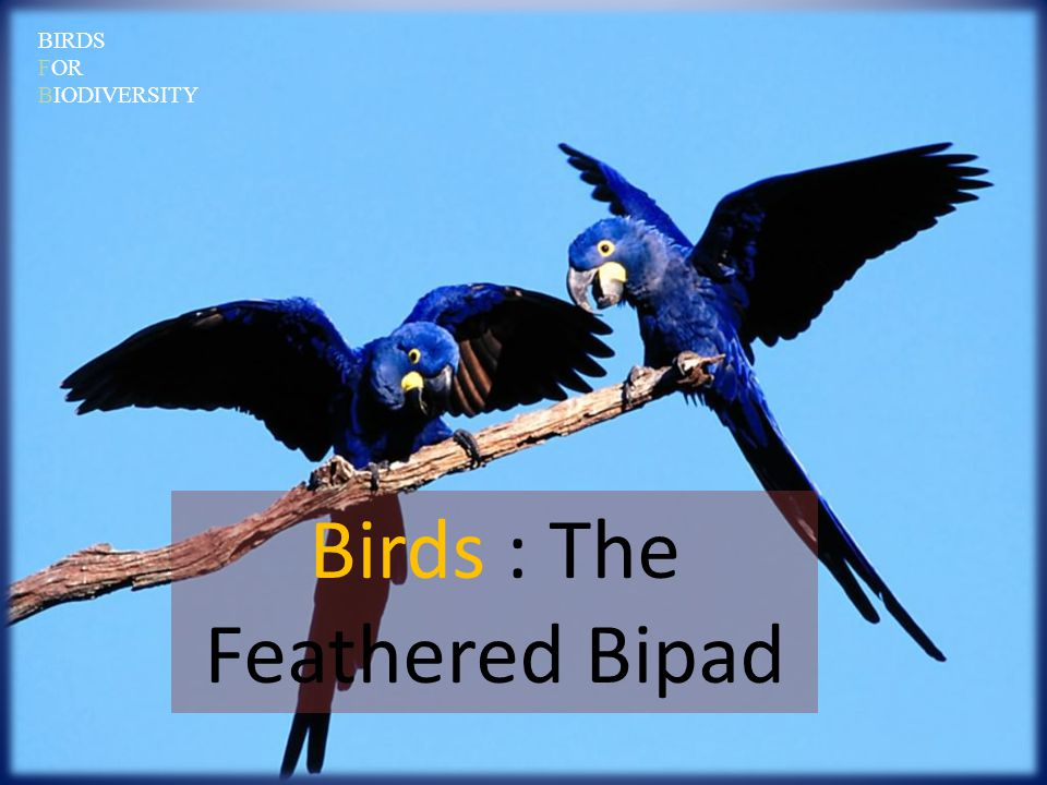 Birds : The Feathered Bipad BIRDS FOR BIODIVERSITY