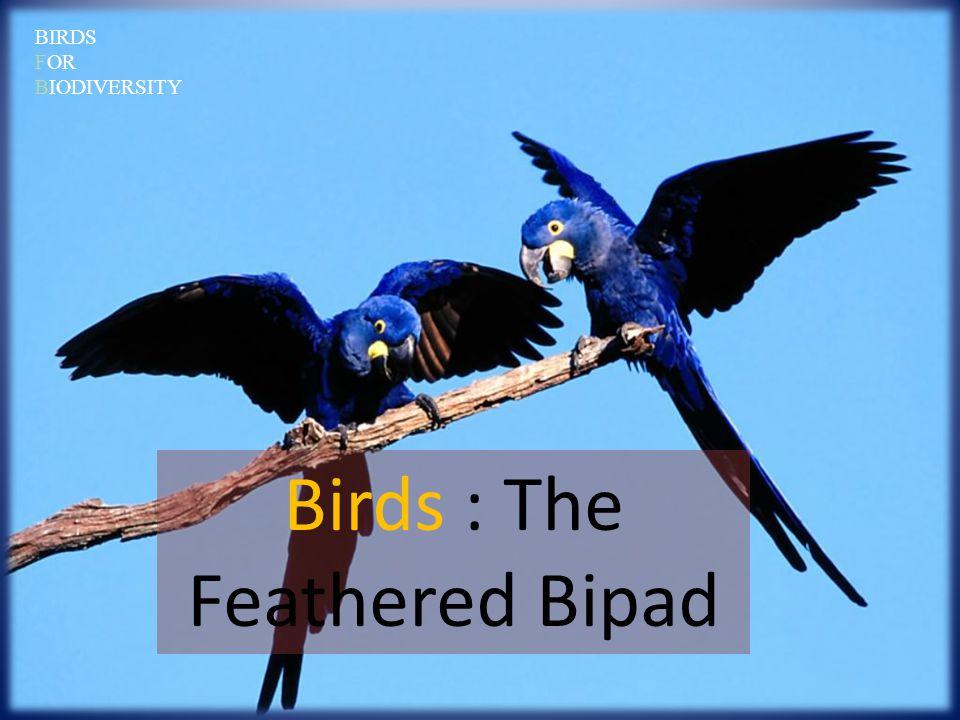 3.How do birds help farmers.