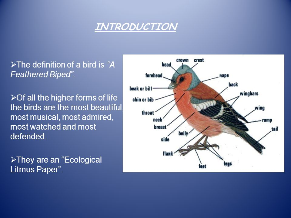 AIMS AND OBJECTIVES To show how human intervention is causing harm to birds.