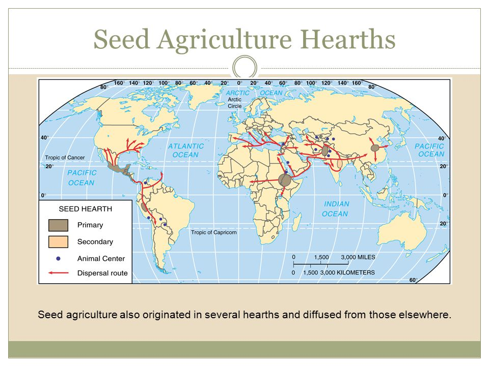Seed Agriculture Hearths Seed agriculture also originated in several hearths and diffused from those elsewhere.