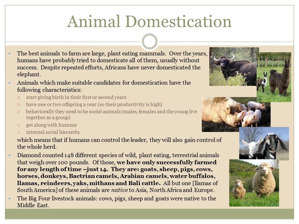 Animal Domestication The best animals to farm are large, plant eating mammals. Over the years, humans have probably tried to domesticate all of them,