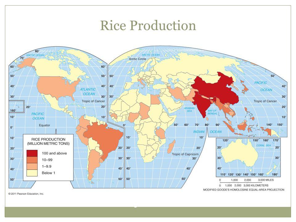 Rice Production Figure 10-12