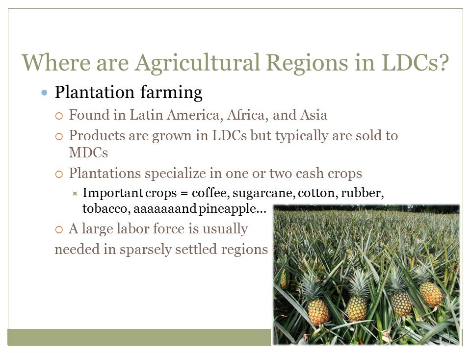 Where are Agricultural Regions in LDCs? Plantation farming  Found in Latin America, Africa, and Asia  Products are grown in LDCs but typically are s
