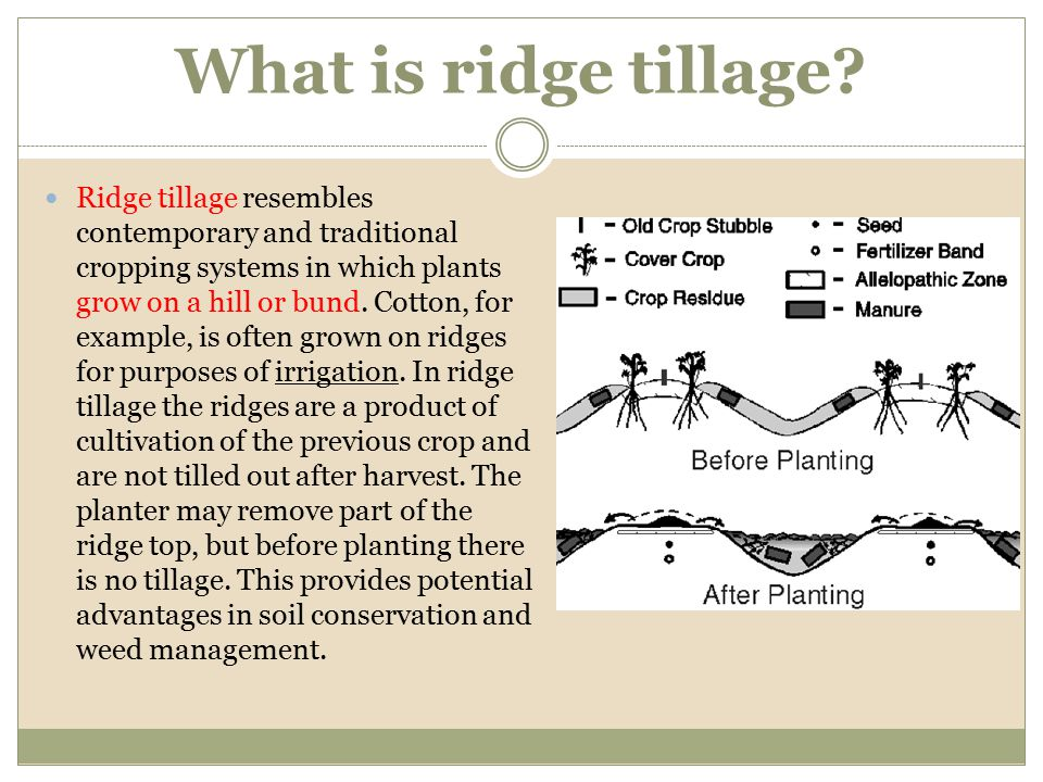 What is ridge tillage? Ridge tillage resembles contemporary and traditional cropping systems in which plants grow on a hill or bund. Cotton, for examp