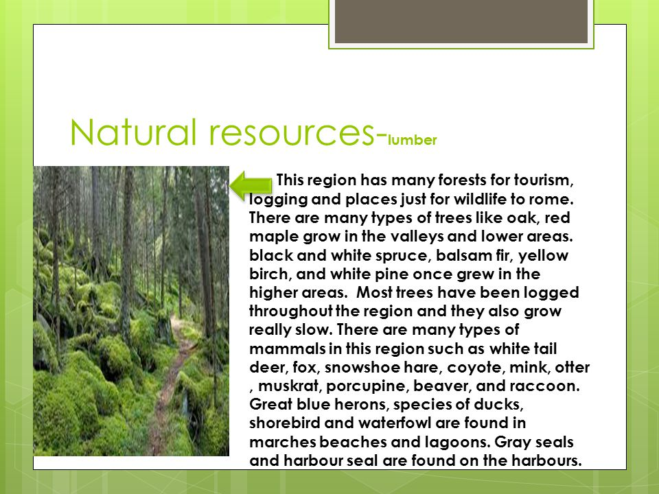 Natural resources- lumber This region has many forests for tourism, logging and places just for wildlife to rome.