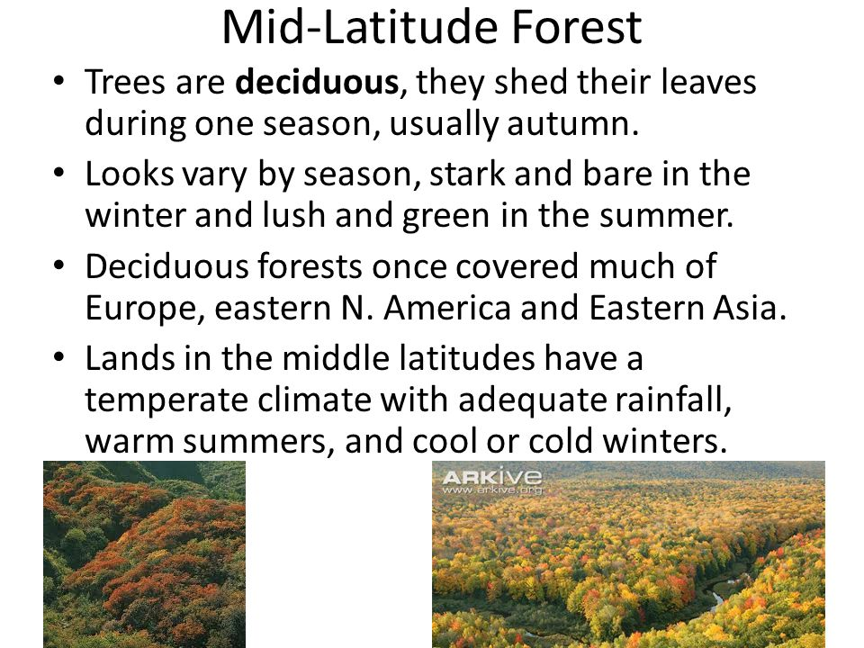 Mid-Latitude Forest Trees are deciduous, they shed their leaves during one season, usually autumn. Looks vary by season, stark and bare in the winter