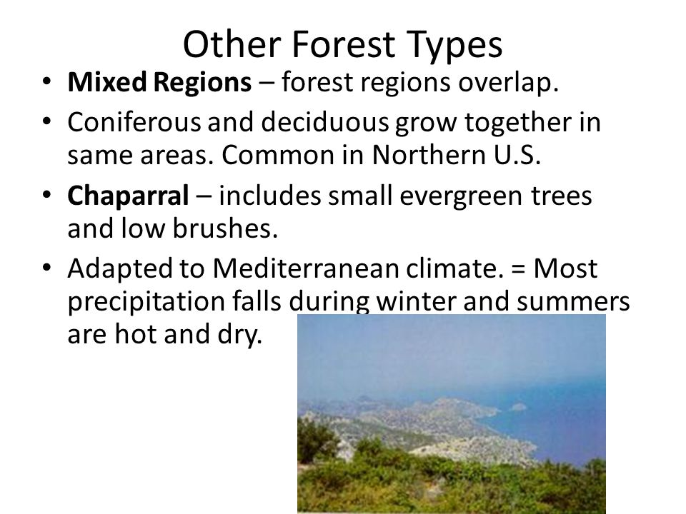 Other Forest Types Mixed Regions – forest regions overlap. Coniferous and deciduous grow together in same areas. Common in Northern U.S. Chaparral – i