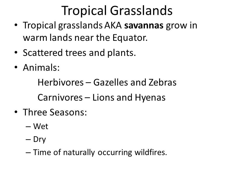 Tropical Grasslands Tropical grasslands AKA savannas grow in warm lands near the Equator. Scattered trees and plants. Animals: Herbivores – Gazelles a