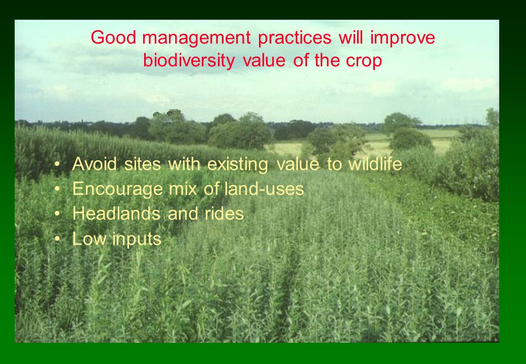 Good management practices will improve biodiversity value of the crop Avoid sites with existing value to wildlife Encourage mix of land-uses Headlands