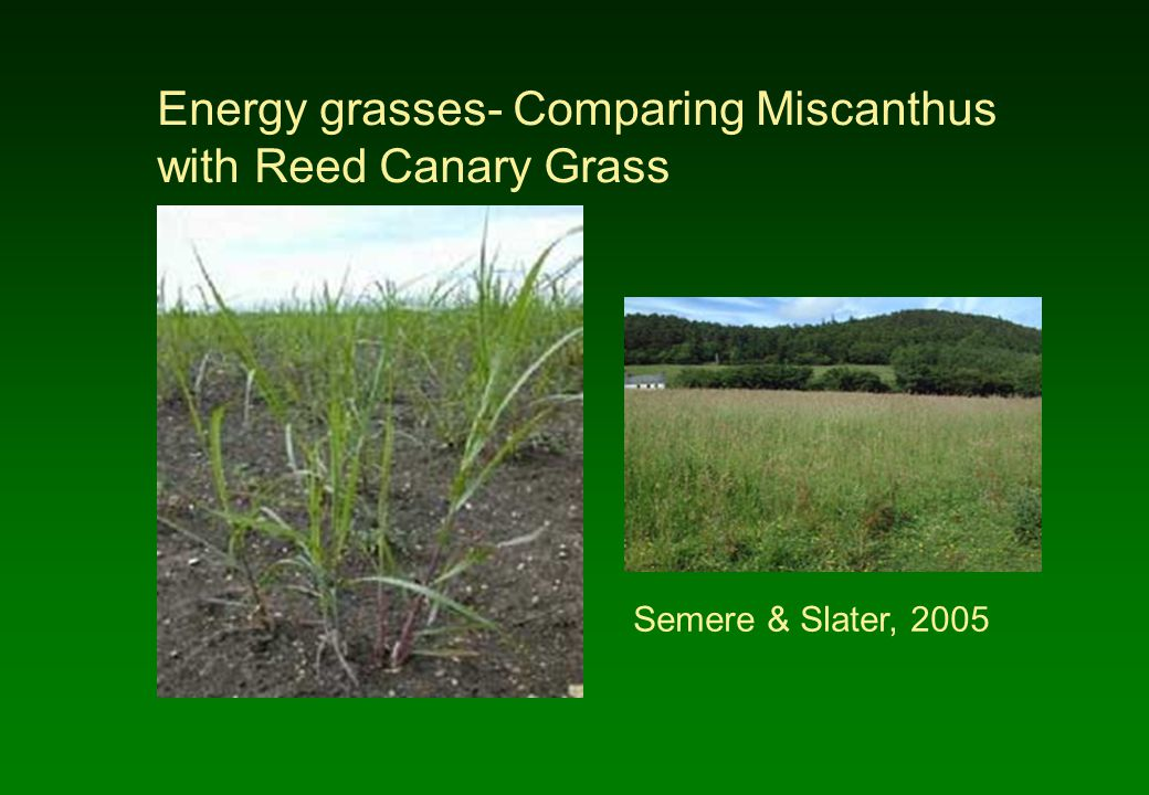 Energy grasses- Comparing Miscanthus with Reed Canary Grass Semere & Slater, 2005